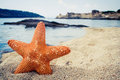 Orange starfish on the sandy beach with sea and stones in the background Stock Image