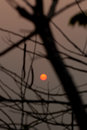 Orange sun in silhouette foreground of tree branches in the evening in thailand Stock Photo