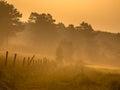 Orange sunrise path Royalty Free Stock Photo