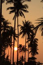 Orange sunset background coconut trees Stock Photo
