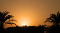 Orange sunset with palm trees silhouetted in bright sky Stock Photography