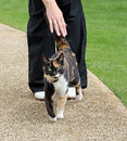 Orange the tabby cat photo of friendly being patted by a passer by in park Stock Photo