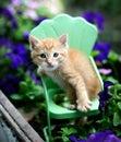 Orange tabby kitten cat on metal green chair in garden Royalty Free Stock Photo