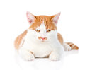 Orange tabby kitten lying in front. isolated on white background Royalty Free Stock Photo