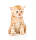 Orange tabby kitten sitting in front. isolated on white Royalty Free Stock Photo