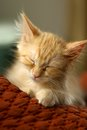 Orange tabby kitten sleeping on pillow Stock Images