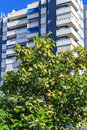 Orange tree in a city front of apartment house Stock Photo