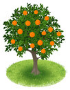 Orange tree in green field summer with fruits illustration Stock Image