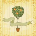 Orange tree in the pot vector illustration eps Royalty Free Stock Images