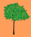 An orange tree, vector illustration Royalty Free Stock Photo