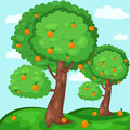 Orange trees illustration of landscape Royalty Free Stock Image
