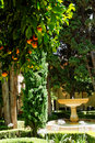 Orange trees in patio Royalty Free Stock Photos