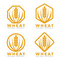Orange Wheat rice logo sign vector design Royalty Free Stock Photo