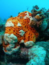 Orange and White Coral Stock Photo
