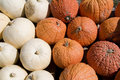 Orange and white pumpkin background Royalty Free Stock Photography