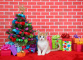 Orange and white tabby kitten by christmas tree Royalty Free Stock Photo