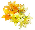 Orange and white-yellow lilies Royalty Free Stock Photo