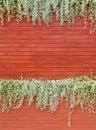 Orange woodden wall with foliage background Stock Photo