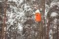 Orange wooden birdhouse hanging on the birch tree. Royalty Free Stock Photo