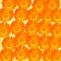 Orange and yellow Calendula officinalis flowers (pot marigold, ruddles, common marigold, garden marigold), texture background Royalty Free Stock Photo