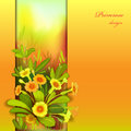 Orange yellow primroses