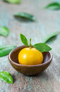 Oranges citrus japonica thunb in a ceramic dish Stock Photo