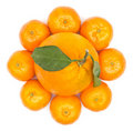 Oranges Flower Royalty Free Stock Photo