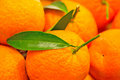 Oranges with green leaves Royalty Free Stock Photo