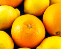 Oranges and lemons a closeup of whole Royalty Free Stock Images