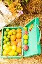 Oranges and a lot of limes with peaches Royalty Free Stock Photo