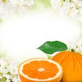 Oranges photo of orange and slice with blossom background Stock Photo