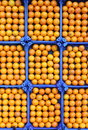 Oranges in rows for sale in a greengrocery Stock Image