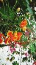 цветок orangr Стоковое Изображение RF
