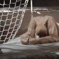 Orangutan Despair Stock Photo