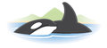 Orca whale logo an swimming Stock Photos