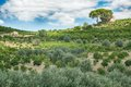 Orchard on the island of Sicily, Italy Royalty Free Stock Photo