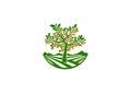 Orchard logo, fruits garden symbol , tree icon, persimmon concept design