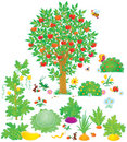 Orchard and vegetable garden Stock Image