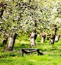 Orchards Royalty Free Stock Image
