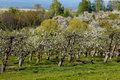 Orchards in spring Stock Images