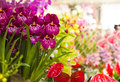 Orchid and anthuriumflowers colorful decorative collection of flowers anthurium Stock Photography