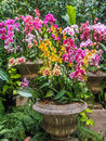 Orchid arrangement in stone vases Royalty Free Stock Photo