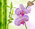 Orchid and bamboo Royalty Free Stock Image
