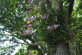 Orchid on the big tree in tropical park Royalty Free Stock Photo
