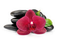 Orchid on black stones white Royalty Free Stock Photo