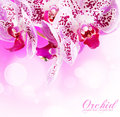 Orchid branch for your design Stock Photo