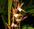 Orchid With Burgundy Speckles And White Petal Royalty Free Stock Photo