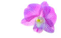 Orchid closeup Stock Images