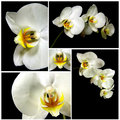 Orchid composition Royalty Free Stock Photo