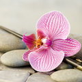 Orchid flower and chopsticks Royalty Free Stock Photos